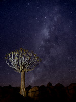 Milky Way Over the Quiver Tree